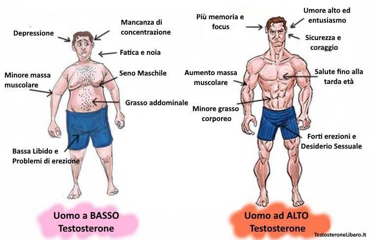 il testosterone può influenzare lerezione)
